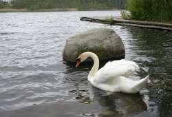 jezioro_kopalino1
