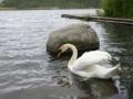 jezioro_kopalino1.jpg