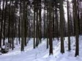 plener_zimowy2.jpg