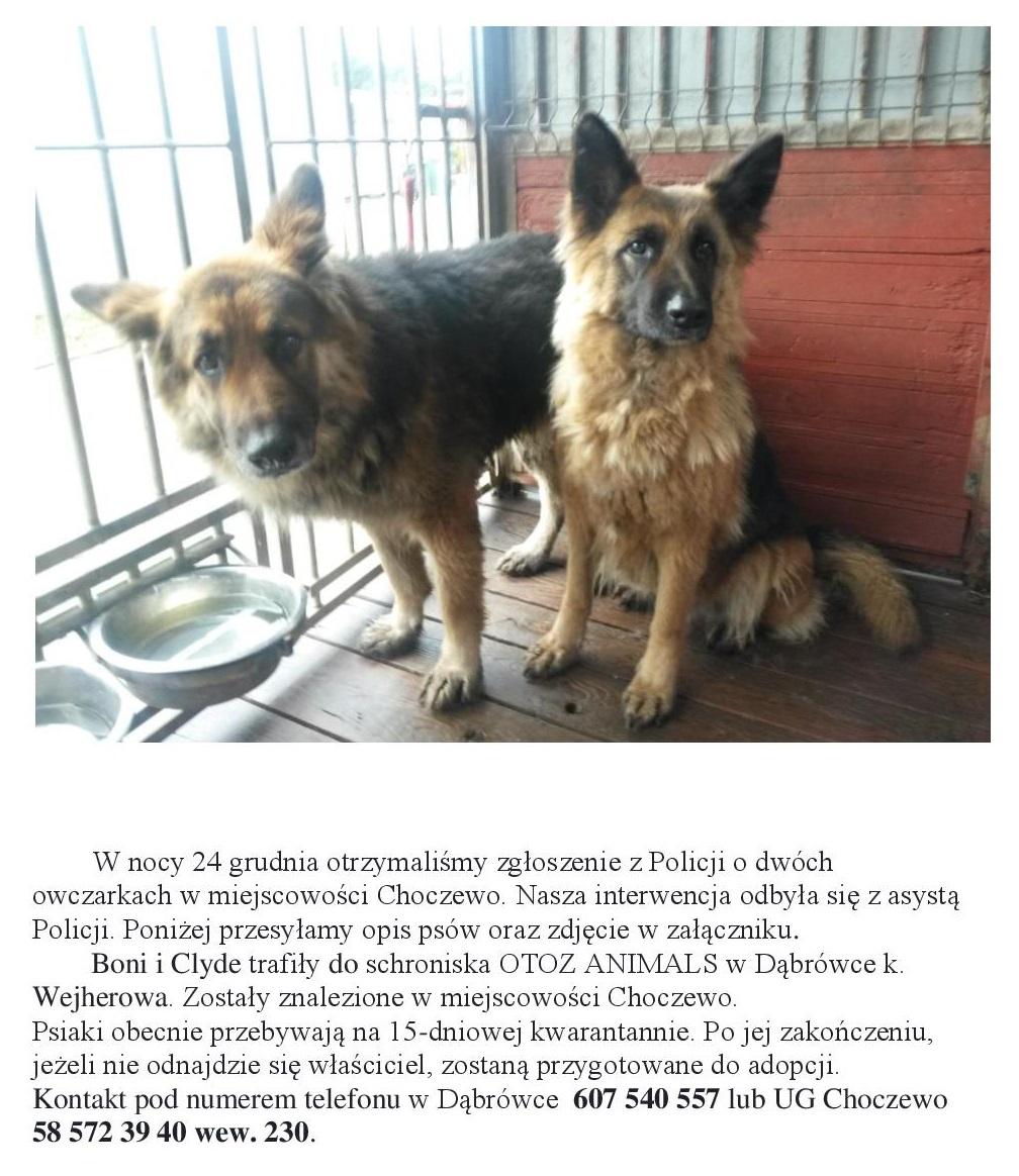 Odnalezione psy w Choczewie